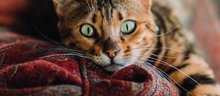 疲れ目の原因解説と、10の解消方法