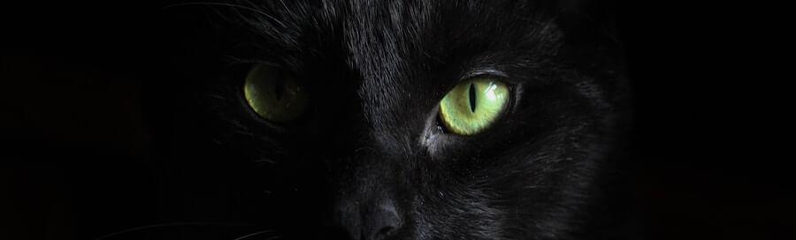目の前真っ黒